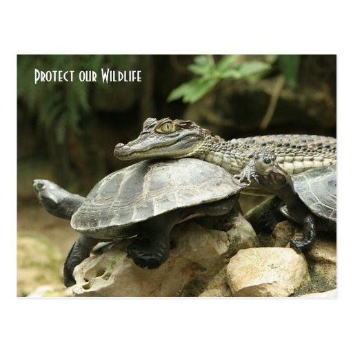 Die Schildkröte und die Krokodil-Postkarte