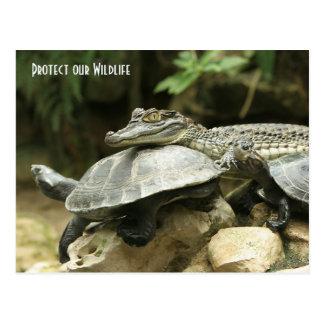 Die Schildkröte und die Krokodil-Postkarte Postkarte