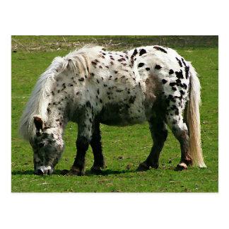 Die Shetlandinseln-Pony Postkarte