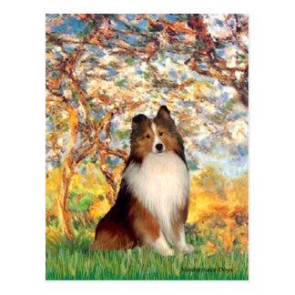 Die Shetlandinseln-Schäferhund 1 - Frühling Postkarte