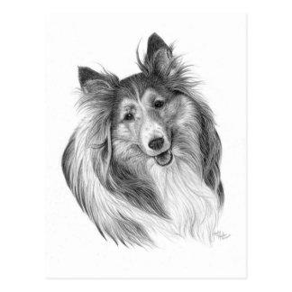 Die Shetlandinseln-Schäferhund, der durch Glenda Postkarte