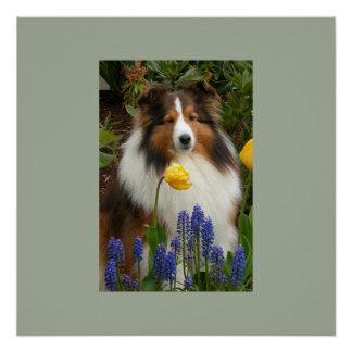 die Shetlandinseln-Schäferhund in den Blumen Poster
