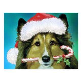 Die Shetlandinseln-Schäferhund Sankt Postkarte