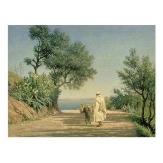 Die Straße zum Meer, Algerien, 1883 Postkarte