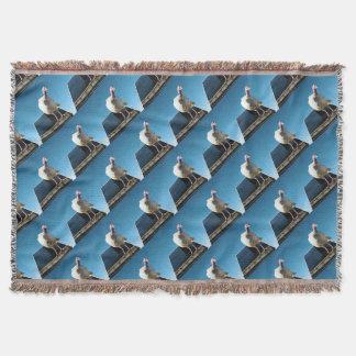 Die Türkeipopout-Kunst, Decke