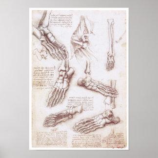 Die untere Extremität, Leonardo da Vinci Poster