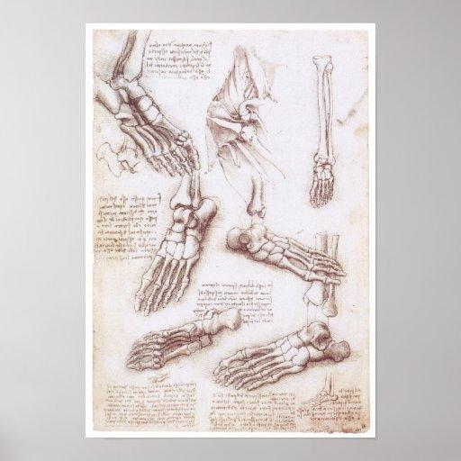 Die untere Extremität, Leonardo da Vinci Posterdruck
