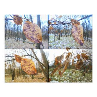 Die verblaßten Farben. Blätter Fotodruck