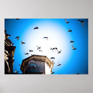 Die Vögel über gotischen Türmen Poster
