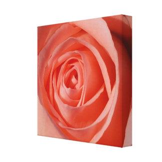 Die weiche Spirale einer Rose Leinwanddruck