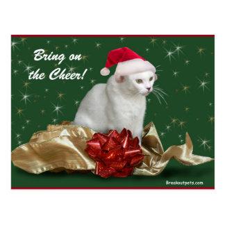 Die Weihnachtskatzen-Postkarte Postkarte