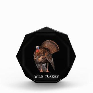 Die wilde Türkei (Alabama, Massachusetts, Acryl Auszeichnung