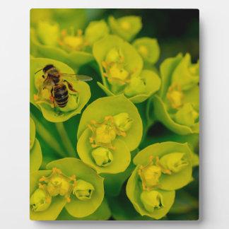 Die Wüsten-Gopher-Pflanze Fotoplatte