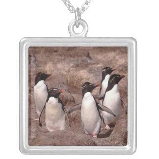 Diese fünf Rockhopper Pinguine (Eudyptes Versilberte Kette