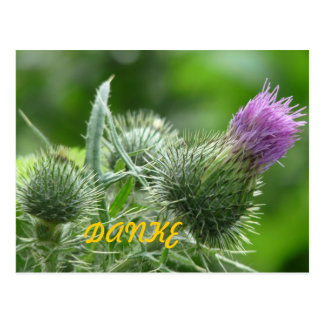 Diestel lila Postkarte Danke
