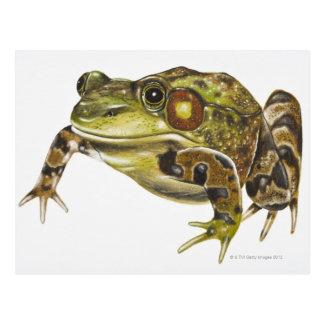 Digital-Illustration des grünen Frosches Postkarte