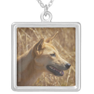 Dingo (Canis Lupus Dingo) Versilberte Kette