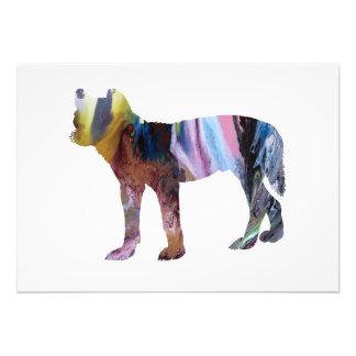 Dingo Fotodruck