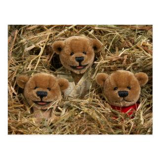 Dinky Bären: Bauers-Kinder Postkarte