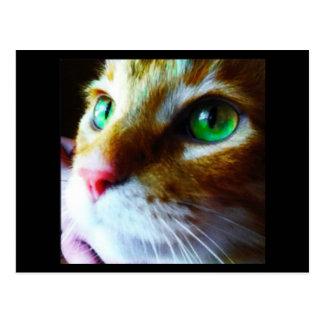 """""""Disco sagt hallo"""" niedliche Katzen-Postkarte Postkarte"""