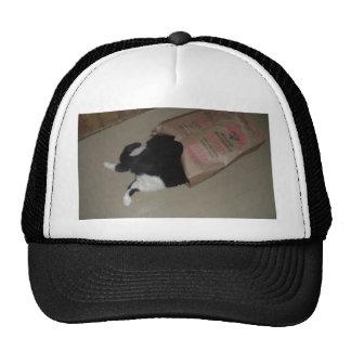 Distel die Katze Kult Cap