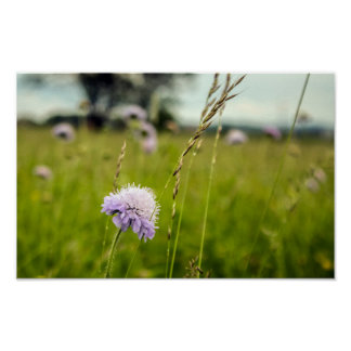 Distel u. Gras, Wildblumen auf den polnischen Poster
