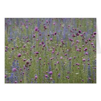 Distel u. lila Streit-wilde Blumen Karte