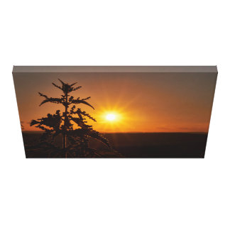 Distel vor einem schönen Sonnenuntergang Leinwanddruck