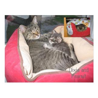 Dixie u. Erdnuss im Bett der Erdnuss Postkarte