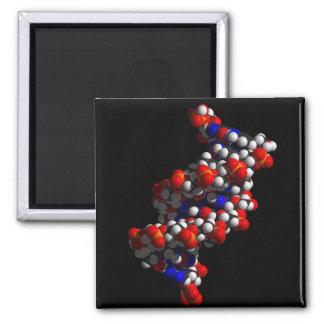 DNS-Doppelhelix-Modell Quadratischer Magnet