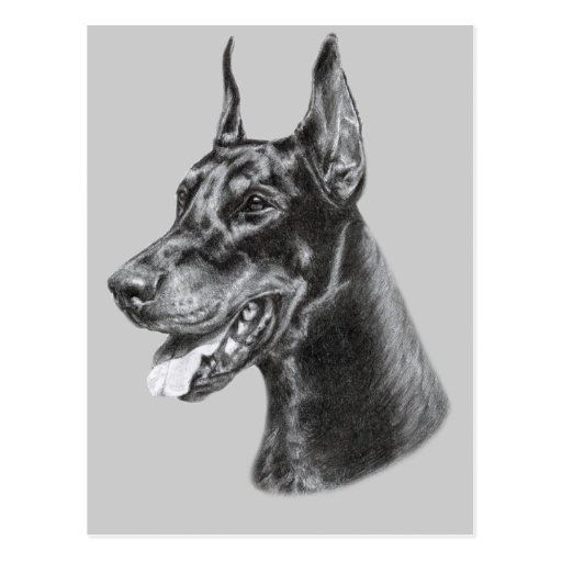 Dobermann-Bleistift-Zeichnen Postkarte