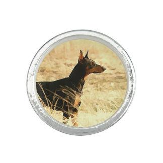 Dobermann in den trockenen Schilfen, die Bild Foto Ringe