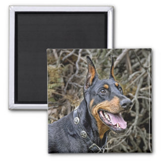 Dobermann-Lächeln-Magnet Quadratischer Magnet