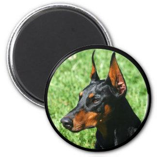 Dobermann Pinschermagnet Runder Magnet 5,7 Cm
