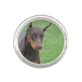 Dobermann Foto Ring