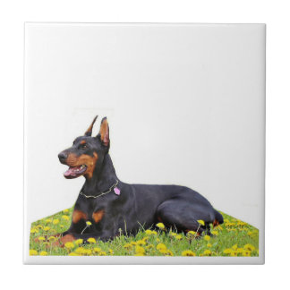 DobermannPinscher Fliese