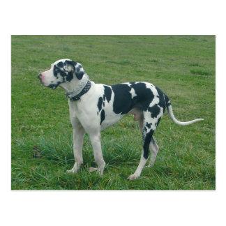 "Dogge-Harlekin-""Bargeld-"" Postkarte"