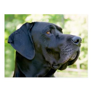 Dogge-Postkarte Postkarten