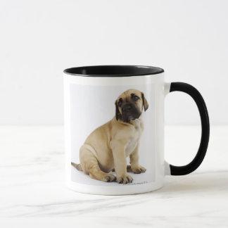 Dogge-Welpe, der im Studio sitzt Tasse