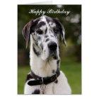 Doggehundealles- Gute zum Geburtstaggrußkarte Karte