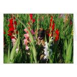 Doggenkarte Gladiolen Grußkarten