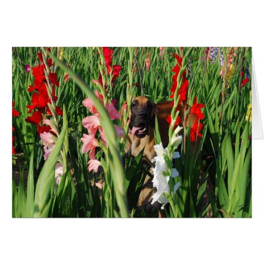 Doggenkarte Gladiolen Karte