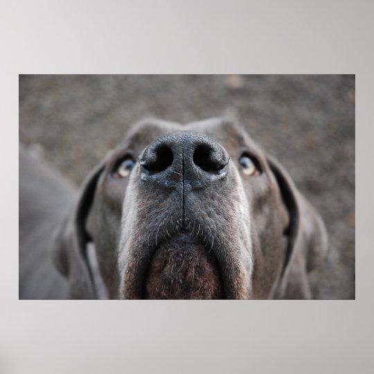 """Doggenposter """"Nase"""" Poster"""