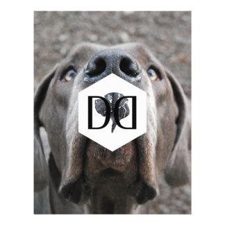 Doggenzucht Inventar Flyer