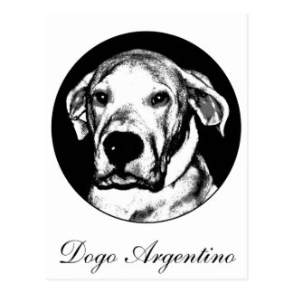 Dogo argentino Postkarte