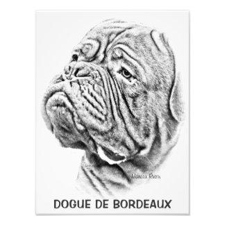 Dogue De Bordeaux - französischer Mastiff Kunst Fotos