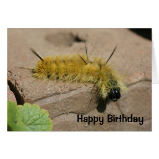 Dolch-Motten-Raupen-Natur-Geburtstags-Karte Grußkarte