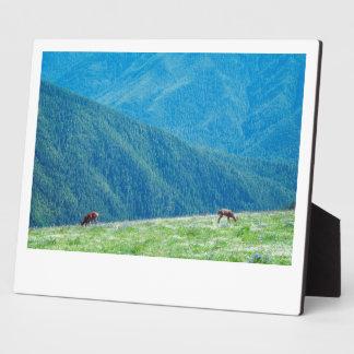 Dollars durch die Berge Fotoplatte