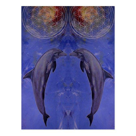 dolphins postkarte