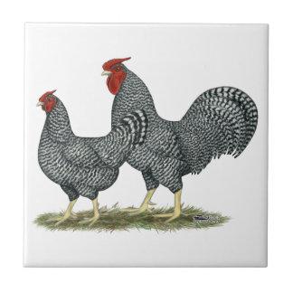 Dominique-Hühner Kleine Quadratische Fliese